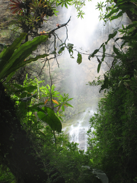 Ecuador rainforest