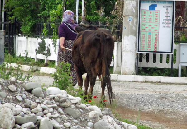 Turkish village woman