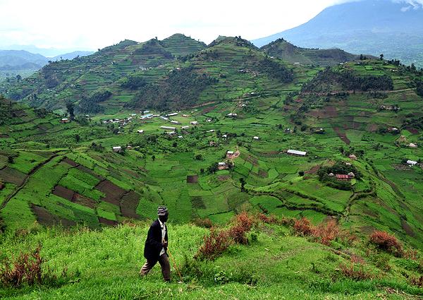 Uganda terraces